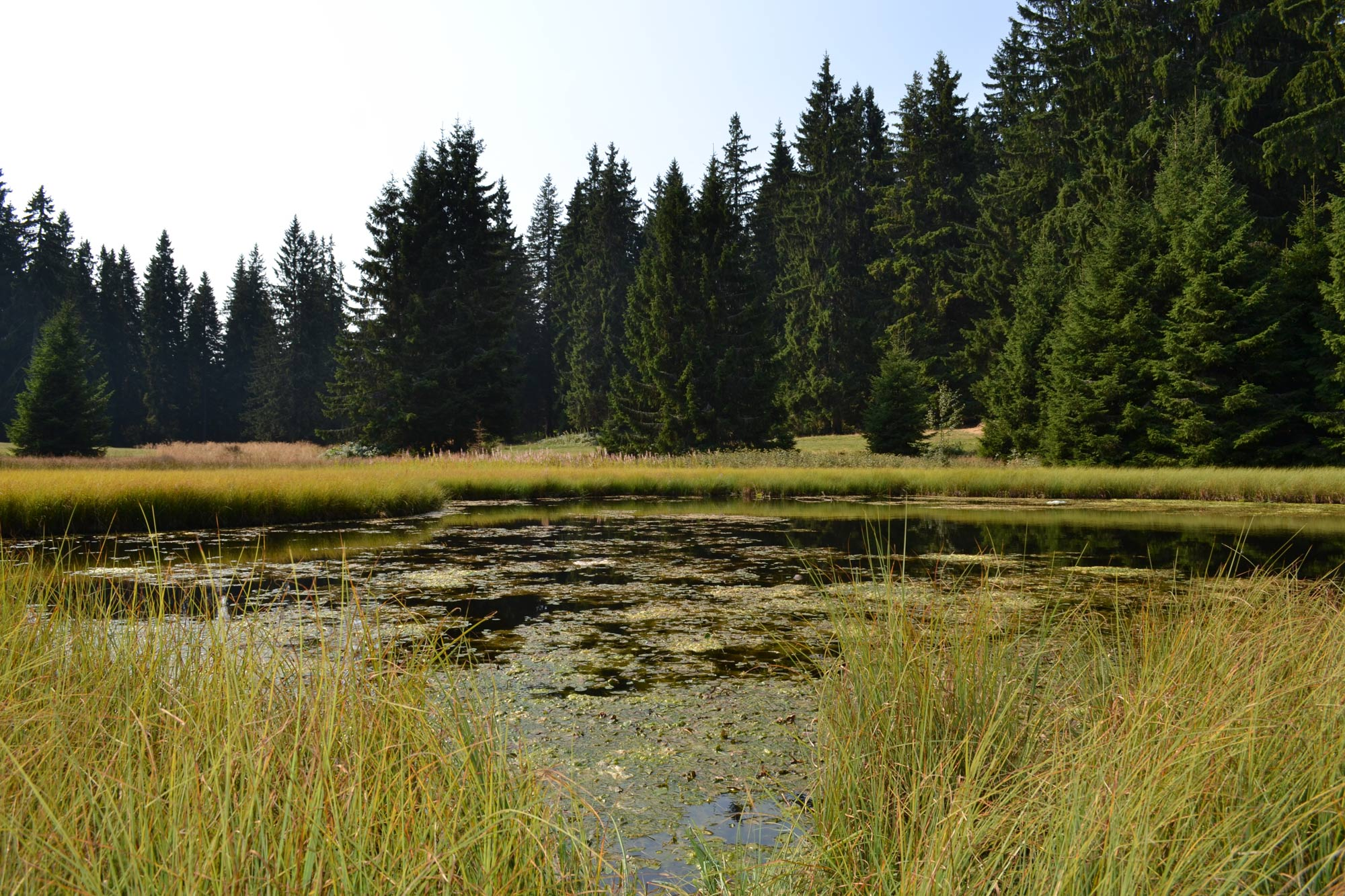 Daićko jezero